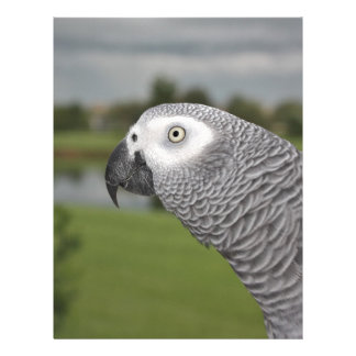 African Grey Parrot by Lake Letterhead