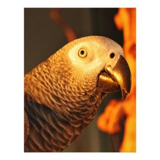 African Grey Parrot Golden Sunset Letterhead Design