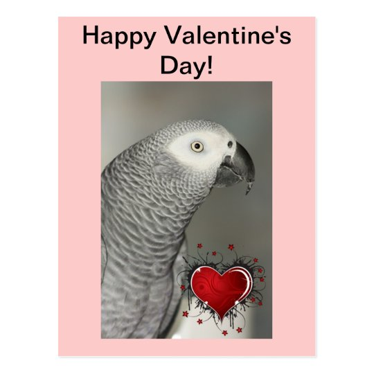 [Image: african_grey_parrot_happy_valentines_day...vr_540.jpg]