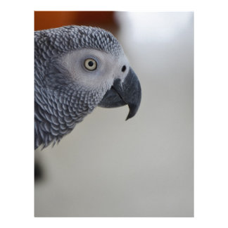 African Grey Parrot Customized Letterhead