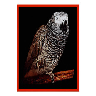 African Grey Parrot Poster Print