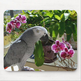 African Grey Parrot with Orchids Mouse Pad