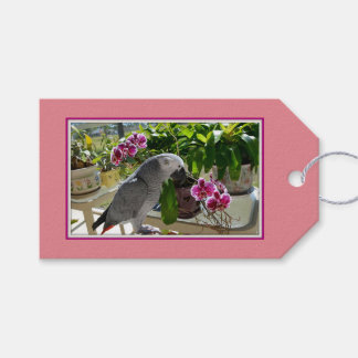 African Grey Parrot with Orchids Pack Of Gift Tags