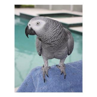 African Grey Pool Party Custom Letterhead