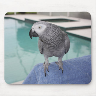 African Grey Pool Party Mouse Pad