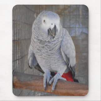 "African Grey ""Rudy"" Mouse Pad"