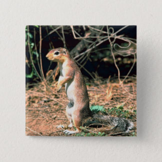 African Ground Squirrel 2 Inch Square Button