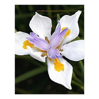 African iris flower in bloom custom letterhead