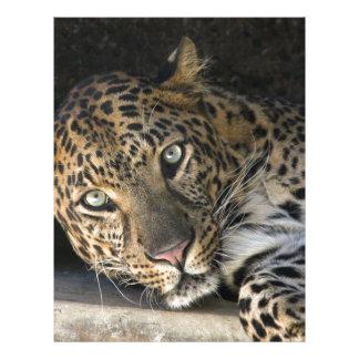 African Leopard Customized Letterhead