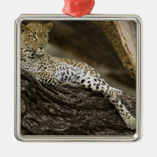 African Leopard, Panthera pardus, in a tree in Metal Ornament