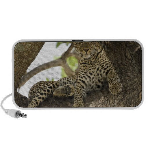 African Leopard, Panthera pardus, in a tree in PC Speakers