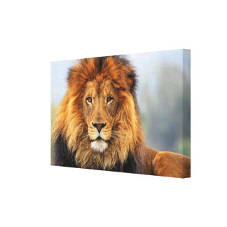 African Lion 1 Canvas Print