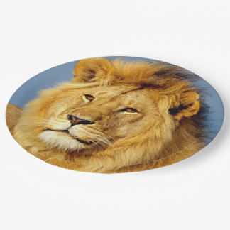 African Lion 2 Paper Plate