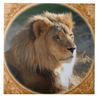 African Lion 6775e11x11fram-b Tile