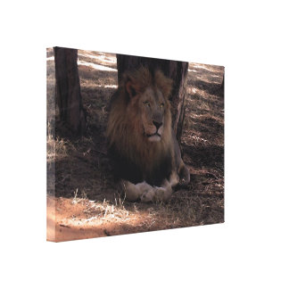 AFRICAN LION Big Five Cat Wildlife Photo Print