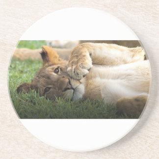 African Lion Cub Coaster