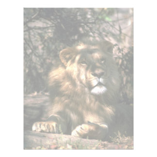 African Lion - Head Shot Of Very Big Male Personalized Letterhead