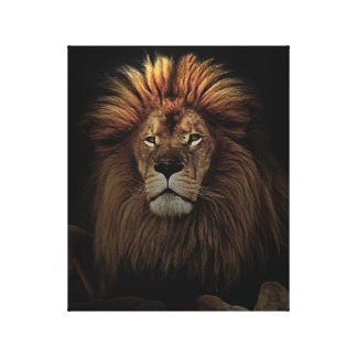 African lion is tops canvas print