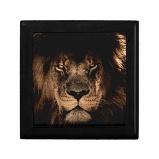 african lion mane close eyes gift box
