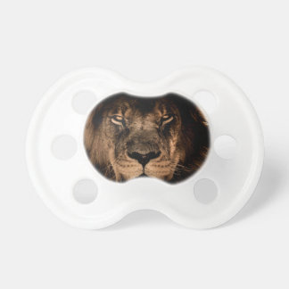 african lion mane close eyes pacifier