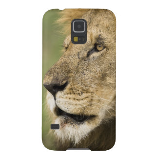 African Lion Portrait, Panthera leo, in the Galaxy S5 Cases