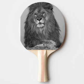 African Lion resting on rock cliff Ping-Pong Paddle