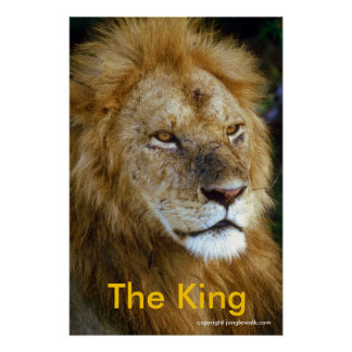 African Lion - The King from Junglewalk.com Poster
