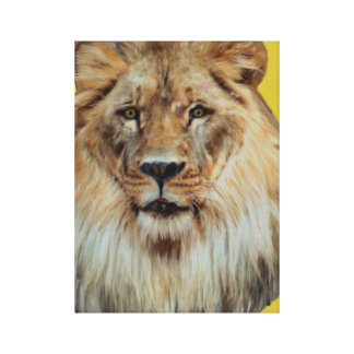 African Lion  Wrapped Canvas