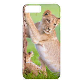 African Lions Kgalagadi iPhone 7 Plus Case