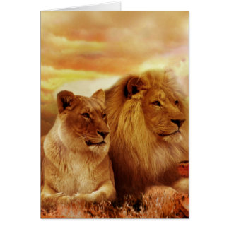 African lions - safari - wildlife card