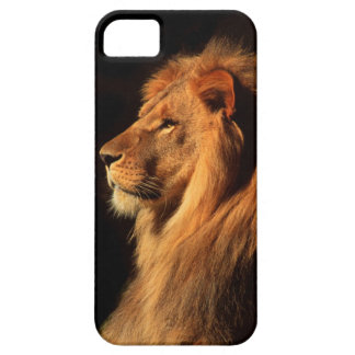 African Male Lion iphone Case by Steven Holt