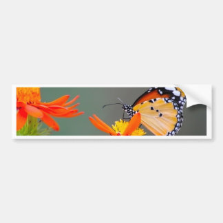 African Monarch butterfly on orange flower Bumper Sticker