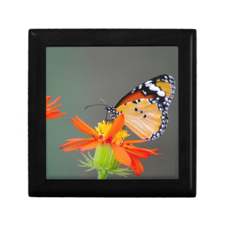 African Monarch butterfly on orange flower Gift Box