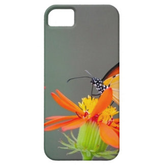African Monarch butterfly on orange flower iPhone 5 Case