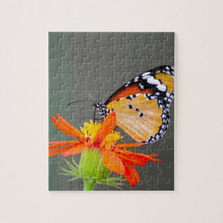 African Monarch butterfly on orange flower Jigsaw Puzzle