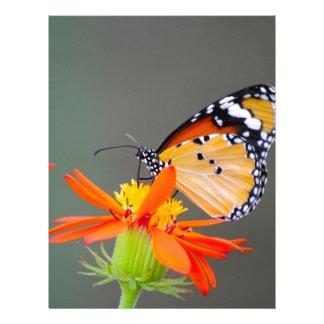 African Monarch butterfly on orange flower Letterhead Template