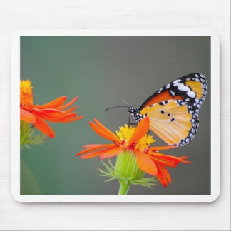 African Monarch butterfly on orange flower Mouse Pad