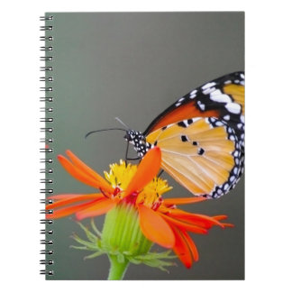 African Monarch butterfly on orange flower Notebook