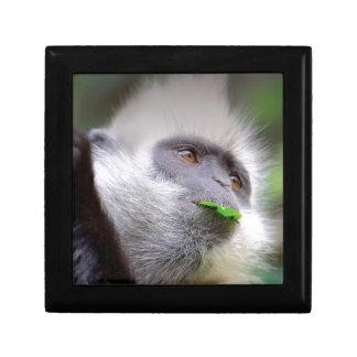 African Monkey Gift Box