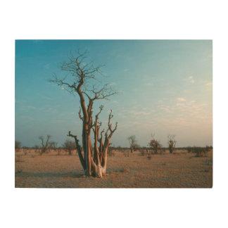 African Moringo Tree On Plain, Etosha National Wood Prints
