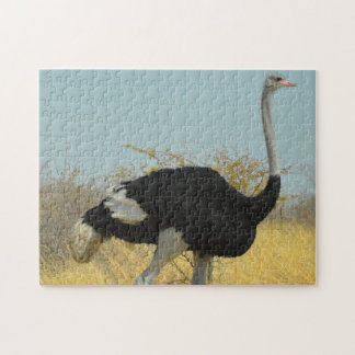 African Ostrige Jigsaw Puzzle