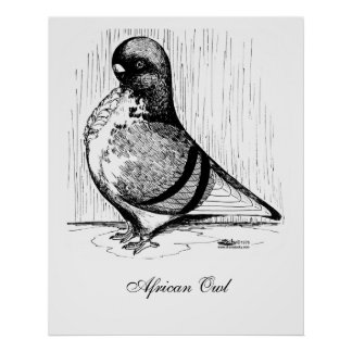 African Owl Pigeon 1978 Poster