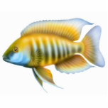 African Peacock Cichlid Holiday Ornament