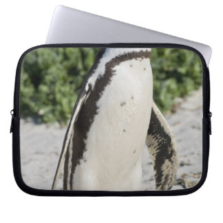 African Penguin, formerly known as Jackass Laptop Computer Sleeves
