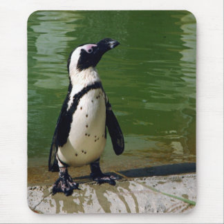 African Penguin Mousepad