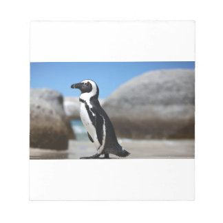 African Penguin Notepad
