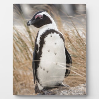 African Penguin On The Beach Plaque