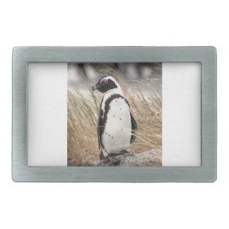 African Penguin On The Beach Rectangular Belt Buckle