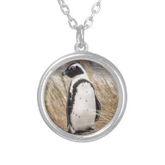 African Penguin On The Beach Silver Plated Necklace