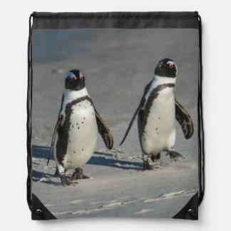 African penguin (Spheniscus demersus)2 Backpacks